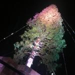 神戸メリケンパーククリスマスツリー