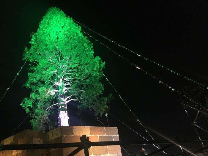神戸メリケンパーククリスマスツリーライトアップ001