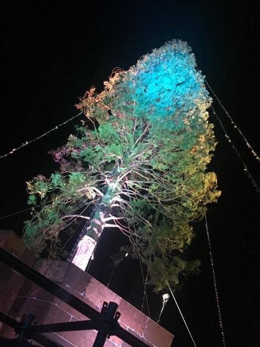 神戸メリケンパーククリスマスツリーライトアップ002